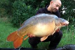 Donauspiegler: 28 Pfund