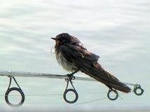 bird-zoom-bearb_
